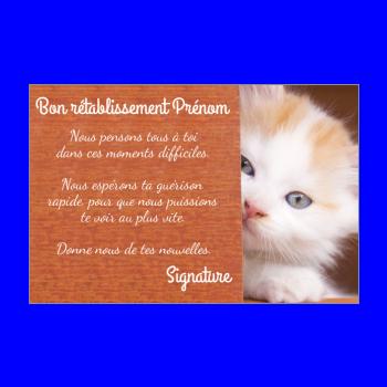 carte chat retablissement marron