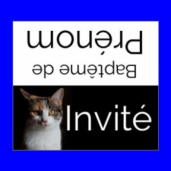 etiquette bapteme table chat noir animaux