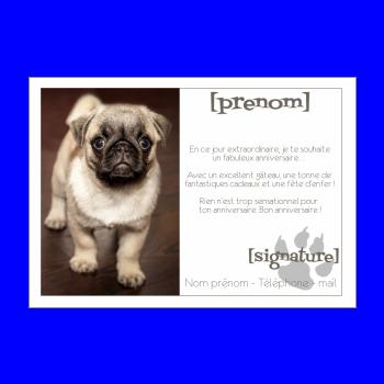 carte anniversaire joyeux chien animaux